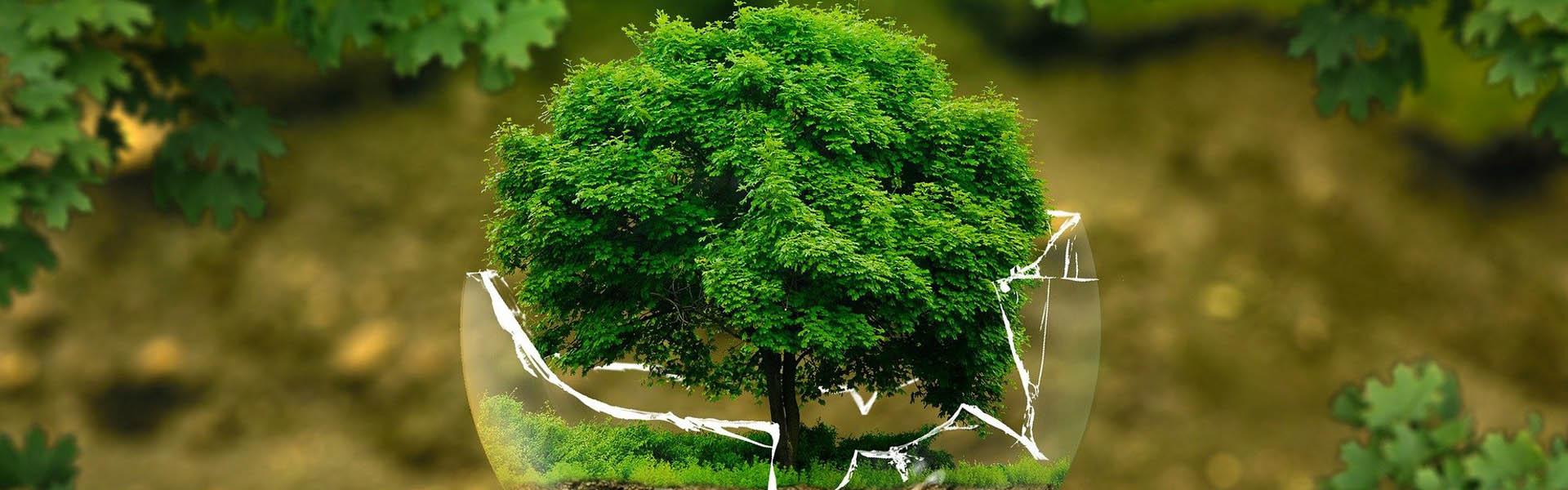 Lones ecològiques per realitzar una campanya impactant